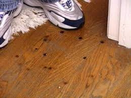 how to remove burn marks on a hardwood floor hgtv