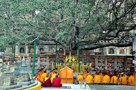 india pm to present sapling of original lord buddha bodhi tree