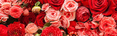 florist in lakeview or flower shop u0026 flower delivery