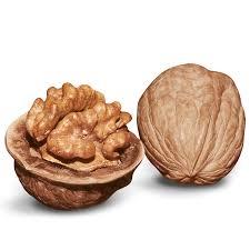 walnut trees from stark bro s walnut trees for sale
