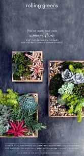 558 best succulent container arrangements images on pinterest