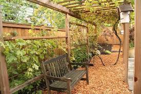 Vine Trellis Ideas Grape Vine On Fence Patio Contemporary With Outdoor Dining Modern