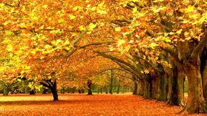 free pumpkin desktop wallpaper autumn desktop wallpapers