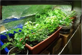indoor vegetable gardening home outdoor decoration