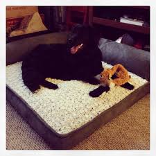 costco pet beds costco dog bed home pinterest costco dog beds and doggies