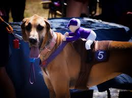 horse jockey halloween costume 6 funny dog halloween costumes you can make with little or no