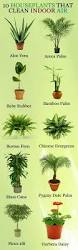 best 25 small indoor plants ideas on pinterest indoor green