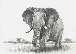 szkic slonia elephant sketch by tomeko on deviantart