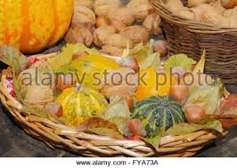 various autumn gourds decorative pumpkins and squash in a wood
