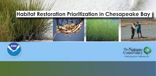chesapeake bay native plants home chesapeake environmental communications inc
