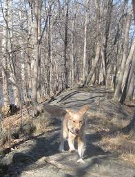 finding safe places to work with your dog off leash something