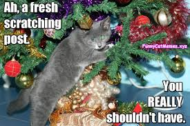 Cat Christmas Memes - cat christmas present cat christmas meme