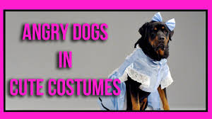 angry dogs in cute costumes youtube