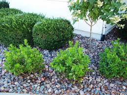 Where To Buy Rocks For Garden by Awesome Landscaping Stones Ideas U2014 Luxury Homes