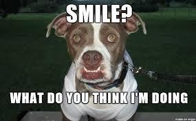 Frowning Dog Meme - frowning dog meme on imgur