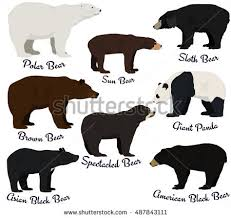 collection silhouettes species bears bearcubs stock