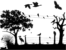 teaching bird id cornell lab of ornithology birdsleuth k 12