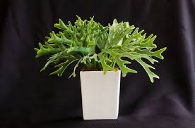 indoor plants really clean the air