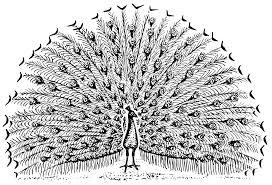 dancing peacock outline