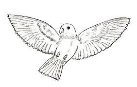 how to draw a bird draw step by step