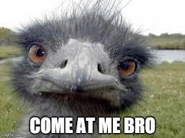 Come At Me Meme - ostrich come me bro imgflip
