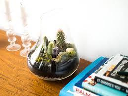 cactus terrarium diy mademoiselle robot