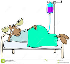 sick moose in bed stock illustration image 40402719