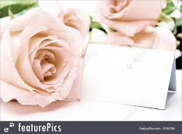 Blank Wedding Invitation Card Stock Flowers Pink Rose And Blank Card Stock Picture I2160798 At