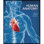 Human Anatomy And Physiology 8th Edition Human Anatomy 8th Edition 9780321883322 Textbooks Com