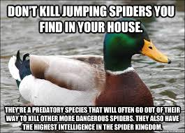 Misunderstood Spider Meme Barnorama - funny for jumping spider funny www funnyton com