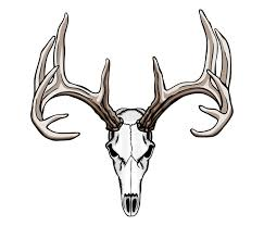 white tailed deer clipart mule deer pencil and in color white