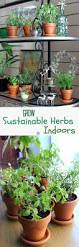 257 best green images on pinterest plants indoor gardening and home