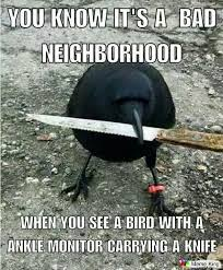 Meme Monitor - you know it s a bad neighborhood when you see a bird with a ankle