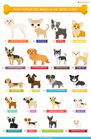 2 female boxer dogs together the ultimate list of popular dog names u0026 breeds infographic by