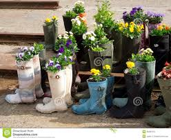 garden flowers in rubber boots stock photos image 35285473