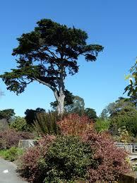 San Francisco Botanical Garden At Strybing Arboretum March 4 2012