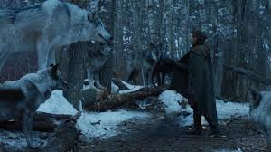 afghan hound vs wolfhound game of thrones star peter dinklage urges fans to stop buying