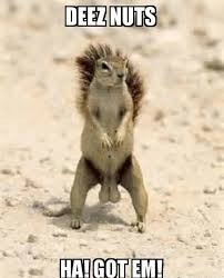 These Nuts Meme - deez nuts ha got em squirrel big testicles nuts meme little