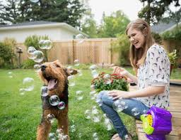 Backyard For Dogs Landscaping Ideas Landscaping With Dogs In Mind Tips For Canine Owners