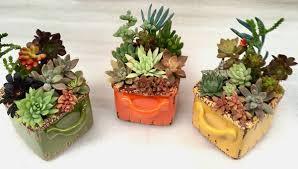 succulent arrangements a set of 3 succulent arrangements home garden in cupertino ca