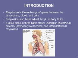 Anatomy And Physiology Place Principles Of Human Anatomy And Physiology 11e1 Chapter 23 The