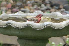 choosing a bird bath options and tips