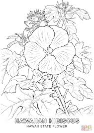 hawaii state flower coloring page free printable coloring pages
