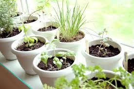 herb garden indoor grow your own indoor herb garden at the apartments at citycenter