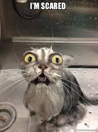 Scared Cat Meme - i m scared cat bath make a meme