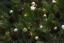 free images branch celebration green fir decor