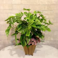 office plant best office plants for work productivity fact about plant