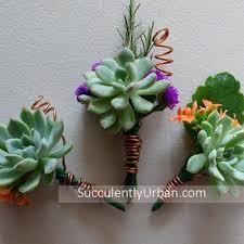 succulent boutonniere succulent boutonniere and corsage set succulents