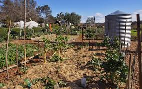 native plants of the sydney region photo essays u2014 2015 u2013 pacificedge