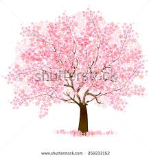 beautiful cherry blossom tree on white stock vector 514531705